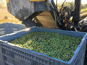 boutique domaine oliversion catégorie matériel de récolte