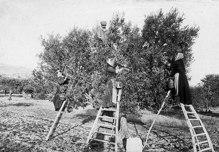 notre-histoire-a-cucuron-domaine-oliversion-2.jpg