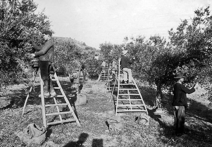 notre-histoire-a-cucuron-domaine-oliversion-3.jpg